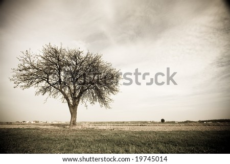 toned image - tree in Poland