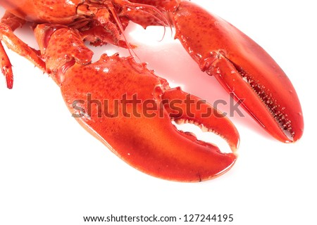 Tong detail juicy freshly cooked lobster isolated on white - stock photo