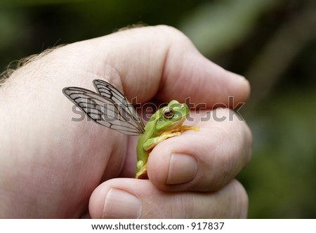 Tongue in cheek image of a flying frog with Cicada wings. - stock photo