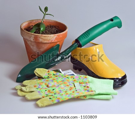 tools and accessories with seeds for indoor or outdoor gardening, with small plant and clay pot with packets of seeds.