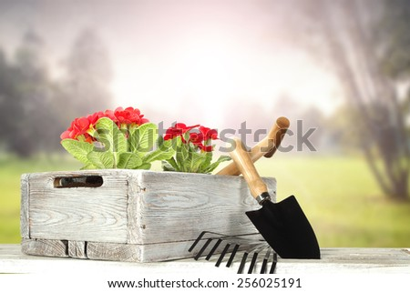 tools of garden and red flowers in wooden old pot  - stock photo