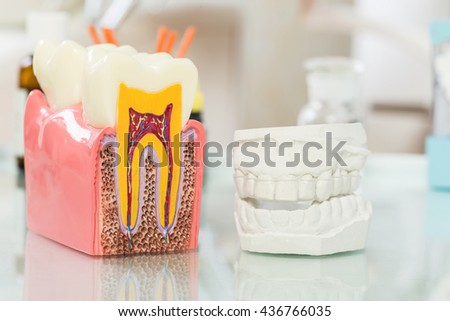 tooth anatomy (vital  tooth, structure, bone, ligament)  - stock photo