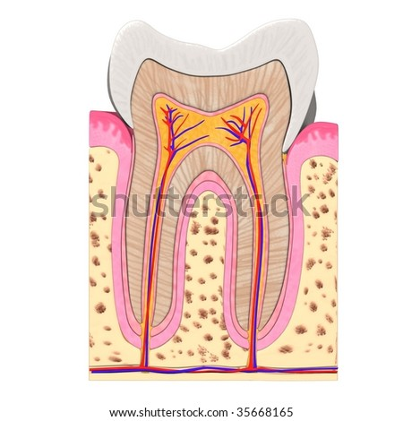 tooth cut - stock photo