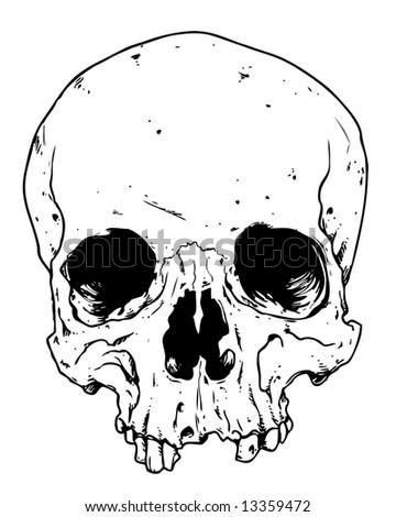toothless skull image - stock photo