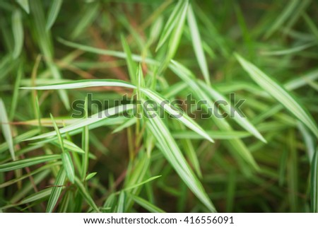 Top and leaf of little bamboo grass - stock photo
