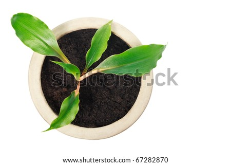 Top close up view of houseplant in ceramic pot isolated on white - stock photo