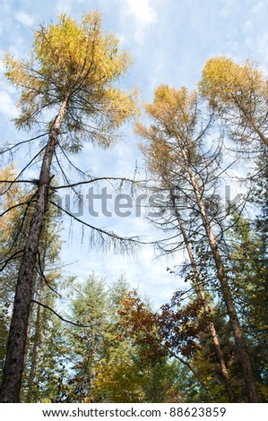 top of trees and sky close-up, autumn scenery of trees