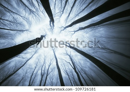 top of trees in forest - stock photo