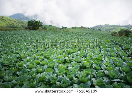 top tourist attraction of Thailand, here is still a thousand cabbage valley. Productivity for Thai people to eat throughout the year.
