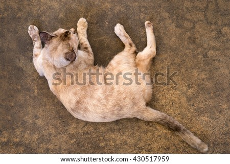 top view cat lying - stock photo