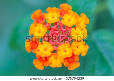 Top view. Close up of beautiful flower on green nature background. Idyllic rural view of pretty surroundings. Outdoors. Shallow depth of field (DOF). Selective focus. - stock photo