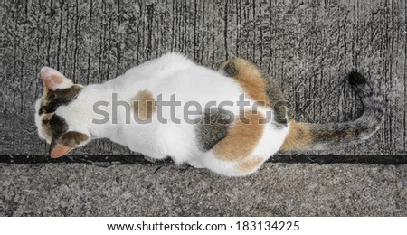 top view little white cat on old concrete floor background