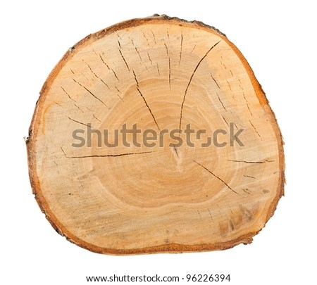 Top view of a birch stump isolated over white background - stock photo