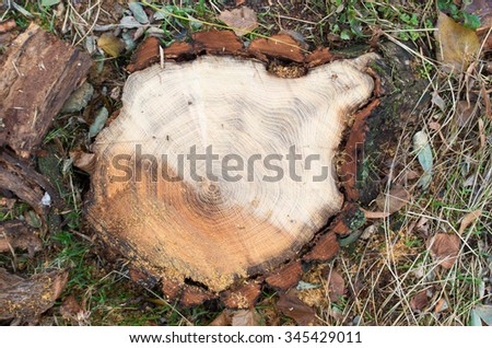Top view of a fresh cut tree stump on the forest with shallow depth of field and blurred background.