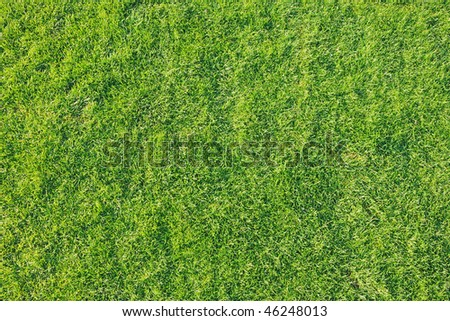 Top view of a freshy and recently cut green grass. - stock photo