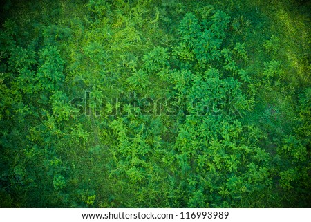 top view of a green grass pattern - stock photo