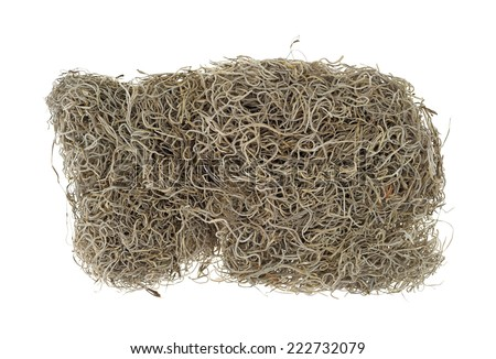Top view of a small block of dried Spanish moss used for crafts on a white background.