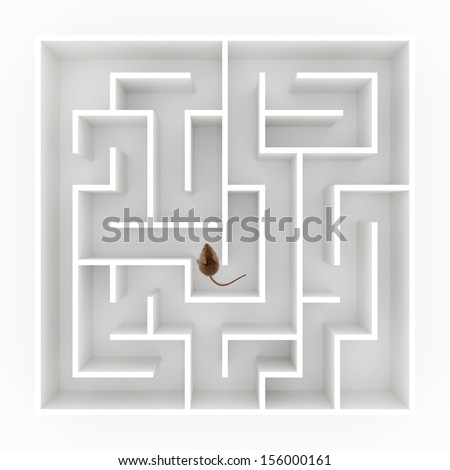 Top view of a tiny mouse (mus musculus) finding his way in maze - stock photo