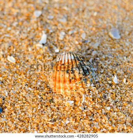 Top view of Acanthocardia tuberculata shell on the sandy beach texture outside background - stock photo