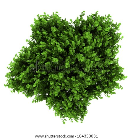 top view of bigleaf hydrangea bush isolated on white background