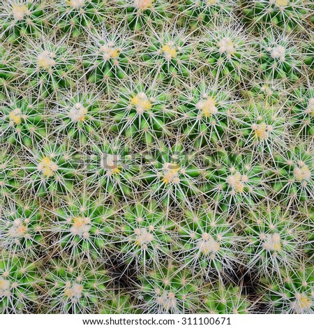 Top view of cactus in the farm
