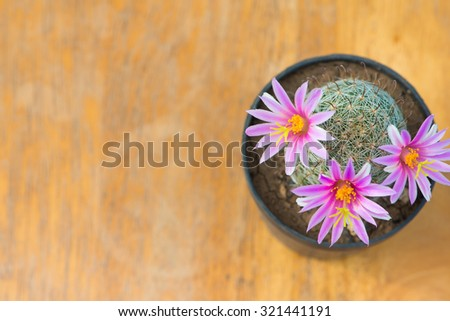 Top view of cactus with pink flower in pot on wood table