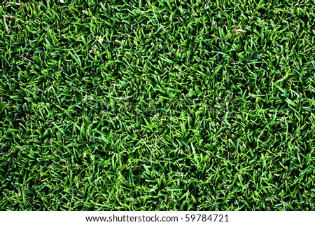 Top view of clean grass background - stock photo
