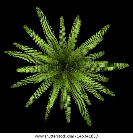 top view of fern plant in pot isolated on black background - stock photo