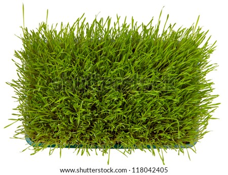 Top view of fresh green wheatgrass  isolated on white - stock photo