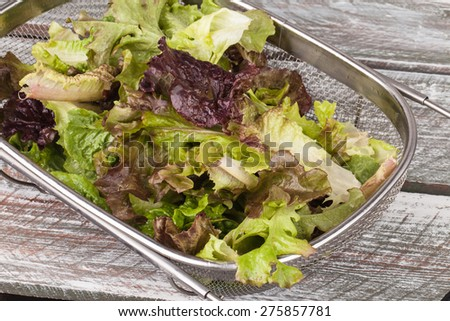 Top view of freshly harvest Lola Rosa lettuce, mustard greens, buttercrunch, and assorted lettuce in a metal colander on an old weathered barn wood table - stock photo