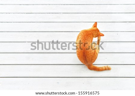 Top view of Ginger Cat Scratch ear with copy space , white background. Animal portrait. - stock photo