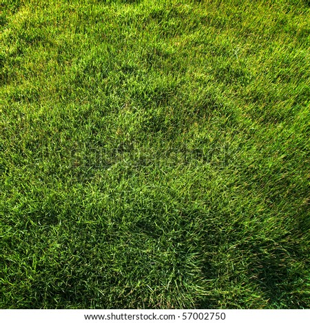 Top view of green grass texture - stock photo