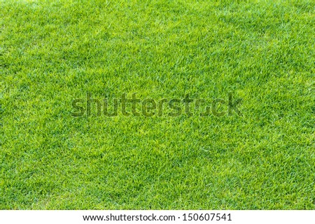 Top View of Green Grass Texture and surface  - stock photo