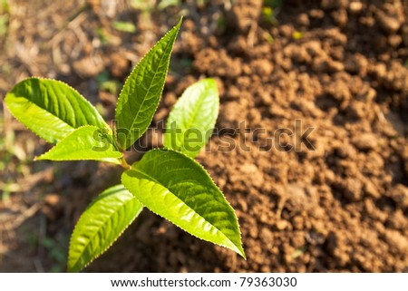 Top view of green leaf on the soil - stock photo