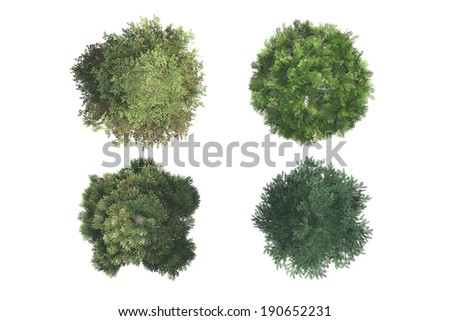 Top view of green natural trees, isolated on white background.