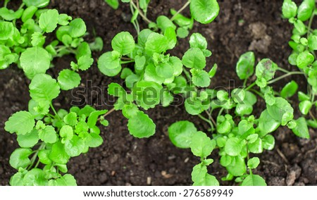 Top view of green young seedlings. - stock photo