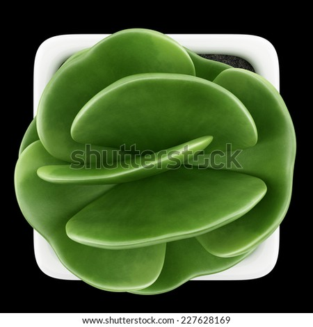 top view of houseplant in pot isolated on black background - stock photo