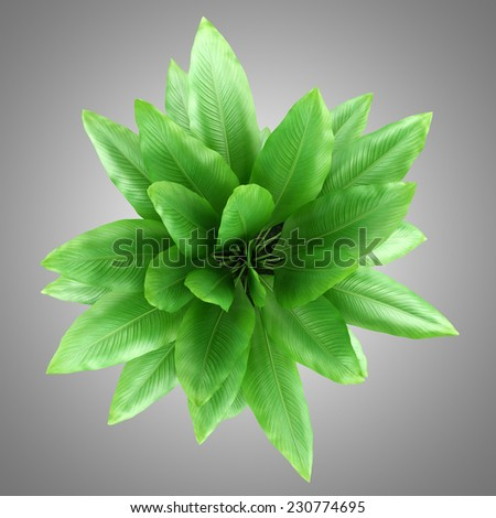 top view of houseplant in pot isolated on gray background - stock photo