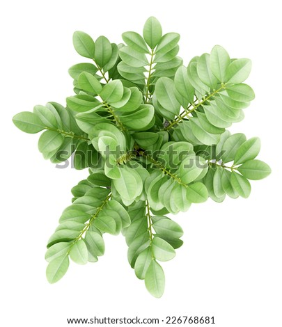 top view of houseplant in pot isolated on white background - stock photo