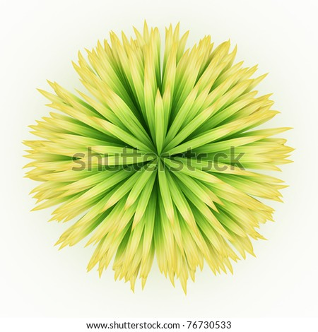 top view of lush long leaves grass isolated over white - stock photo