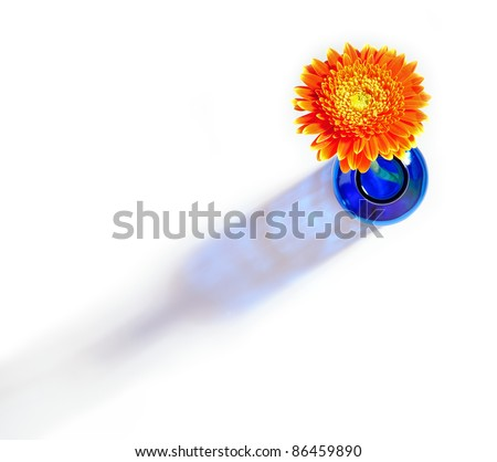 Top view of orange gerbera flower in blue bottle throwing a shadow on a white background - stock photo