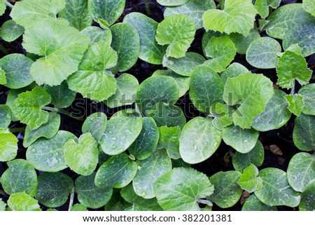 Top view of organic young pumpkin tree on tray - stock photo