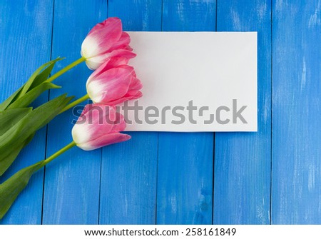 Top view of pink tulips with white sheet of paper on blue wooden background - stock photo