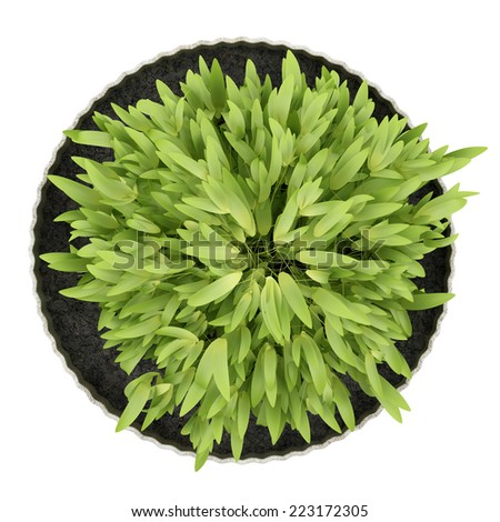 top view of potted houseplant isolated on white background - stock photo