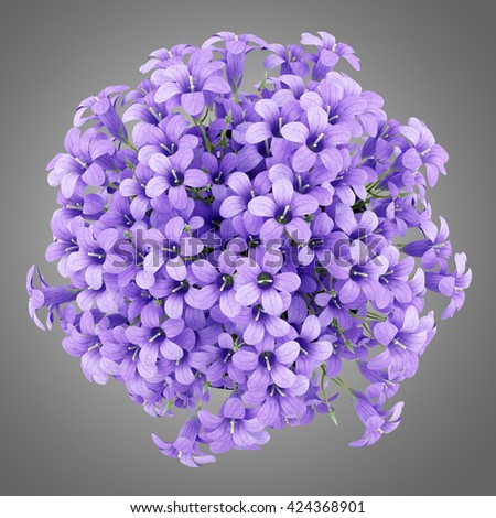 top view of purple flowers in pot isolated on gray background. 3d illustration - stock photo