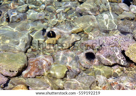 Top view of Sea hedgehogs on the seabed. Underwater scenery.