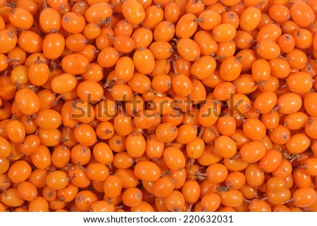 Top view of seabuckthorn as background texture - stock photo