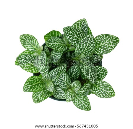 Indoor Plants Stock Images Royalty Free Images amp Vectors