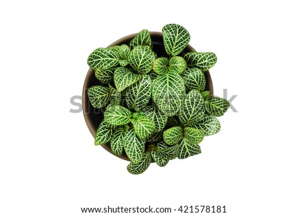 Top view of small plant pot with water drop on white background - stock photo