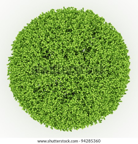 top view of trimed 3d bush isolated on white - stock photo